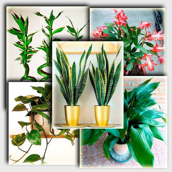 Неприхотливых комнатных растений