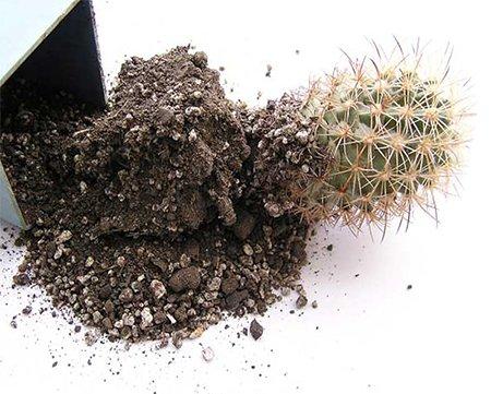 В какую землю кактусы сажать в 761